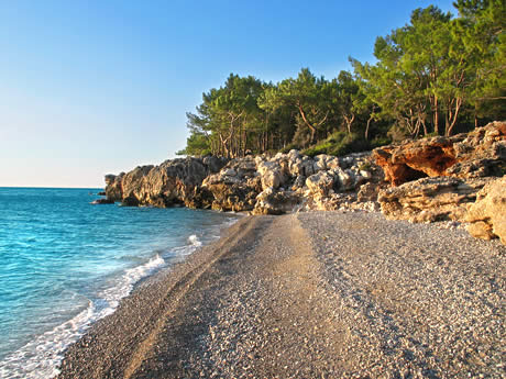 Wild beach with trees near antalya photo